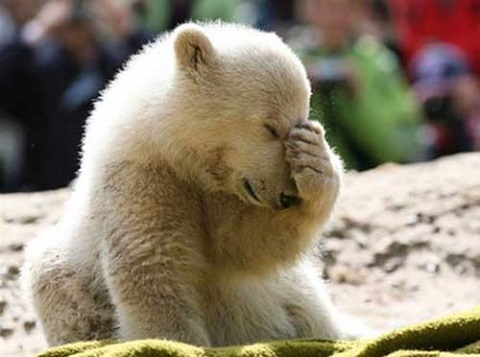 sad-polar-bear
