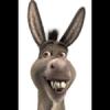 Donkey Teeth
